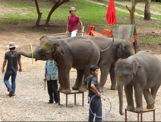 © Elephant Family